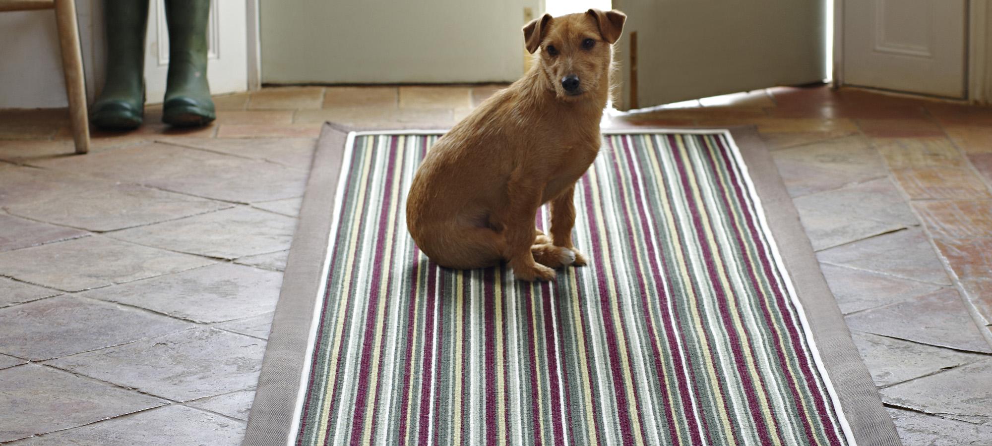 Rugs Falkirk Carpets